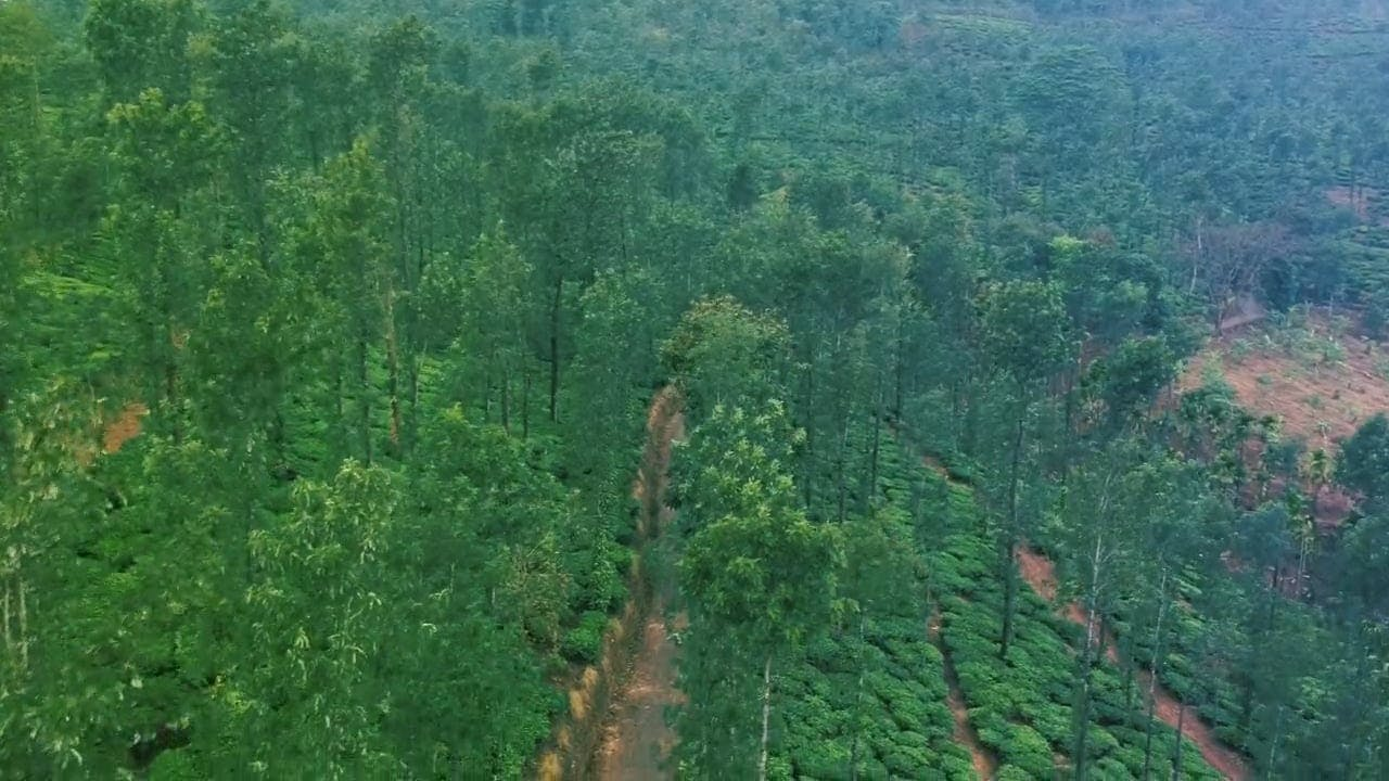 Aerial Shot Of Trees By The Road