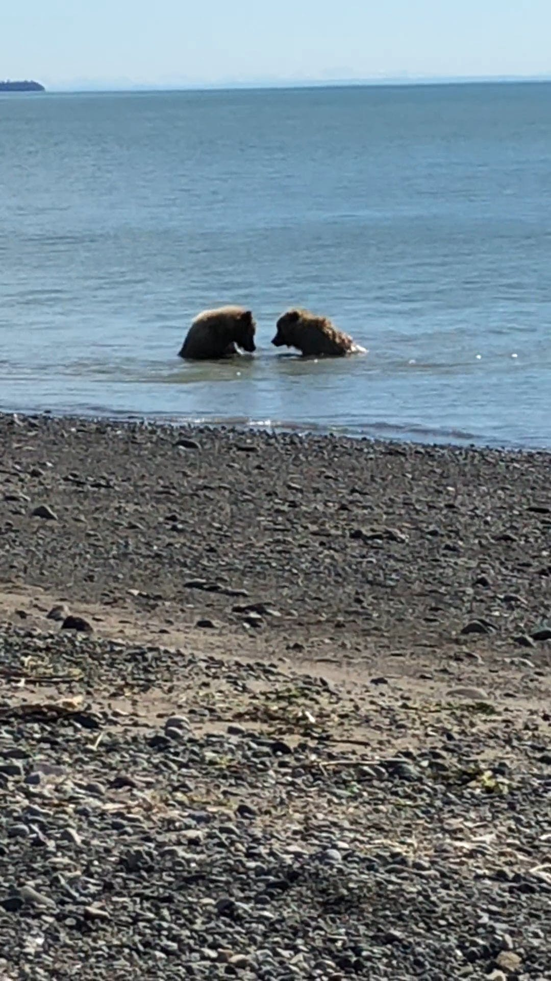 Two Bears At Lake Clark National Park Alaska