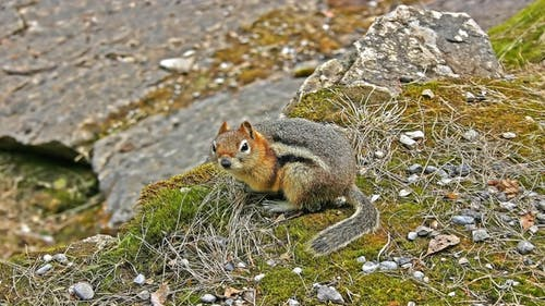 Close-Up Photo Of A Squirrel