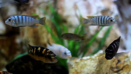 Variety Of Fishes