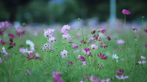 Purple Flowers In The Field