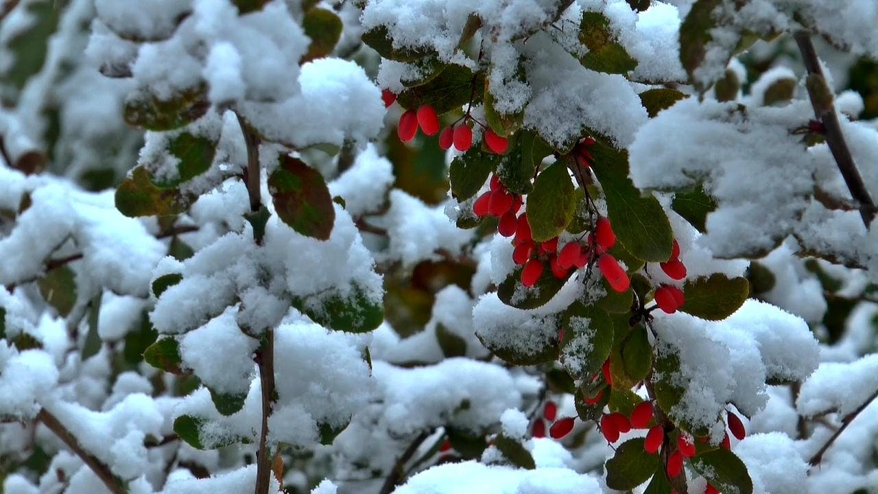 Snowflakes On Leaves