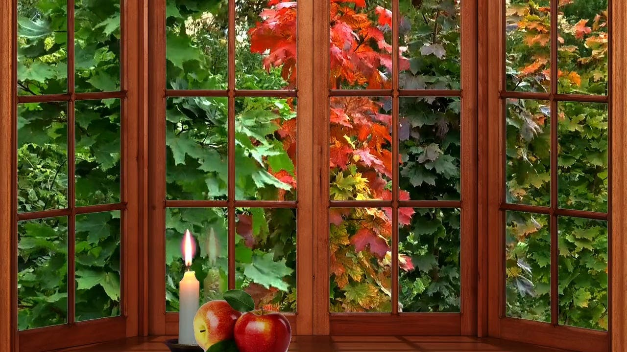 Window Pane With View Of Autumn Leaves