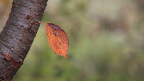 Close-Up Of An Orange Leaf