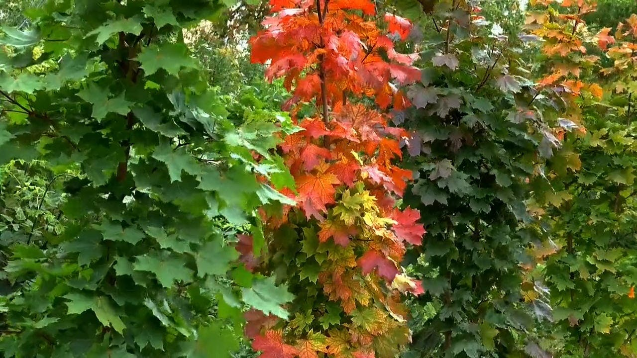 Different Colors Of Autumn