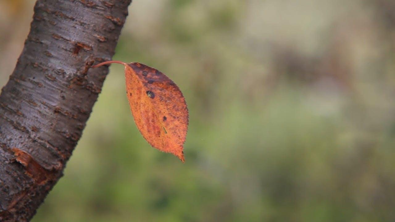 Single Leaf On A Tree Branch