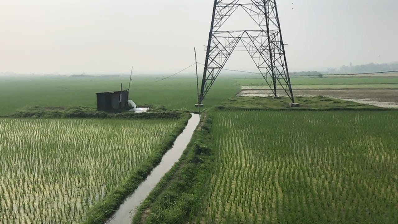 A Vast Rice Field