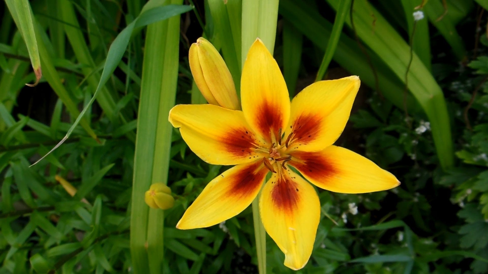 Amazing Star-Like Yellow Flower