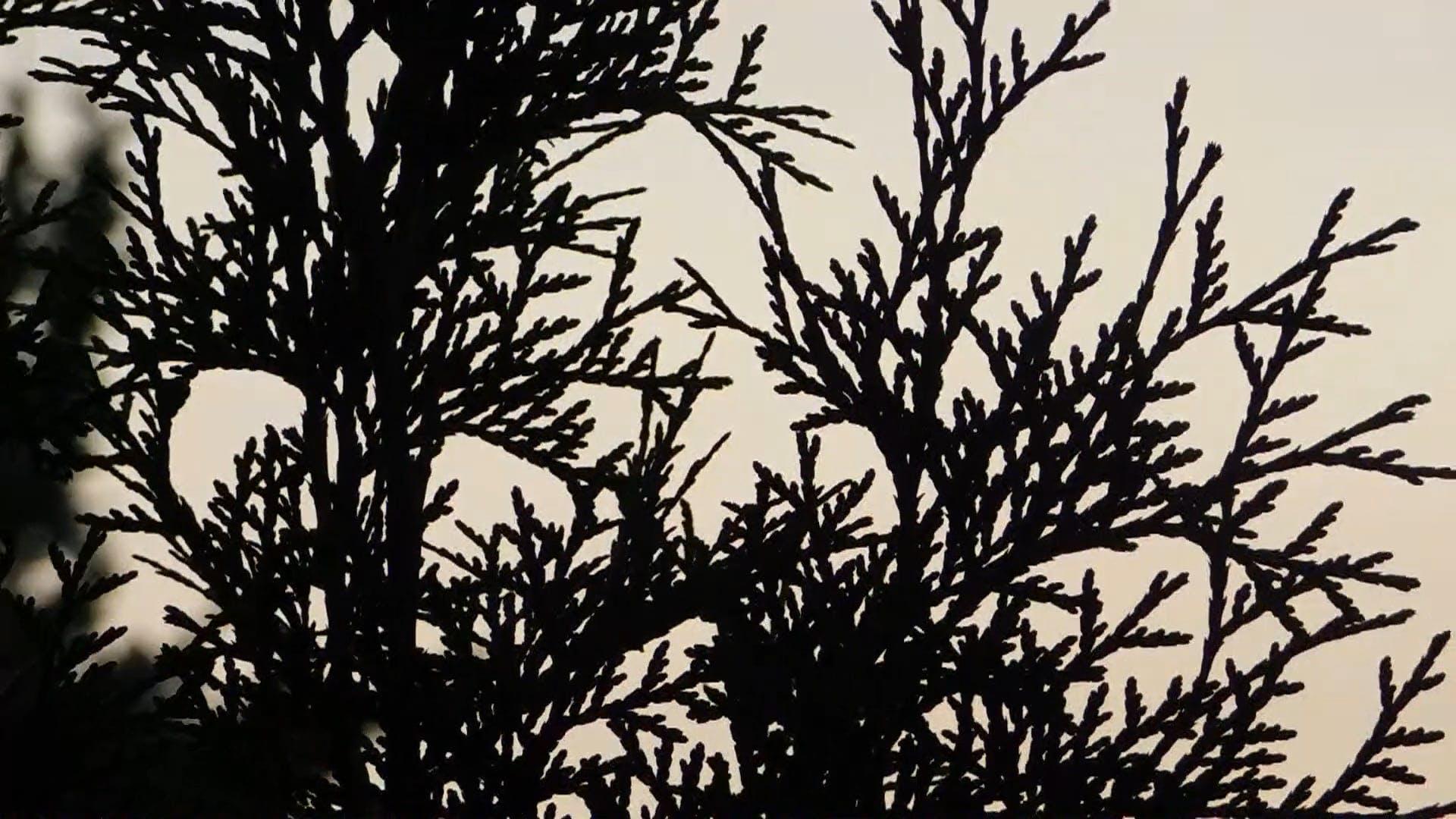 The Sky Through A Bush Awaiting Sunrise