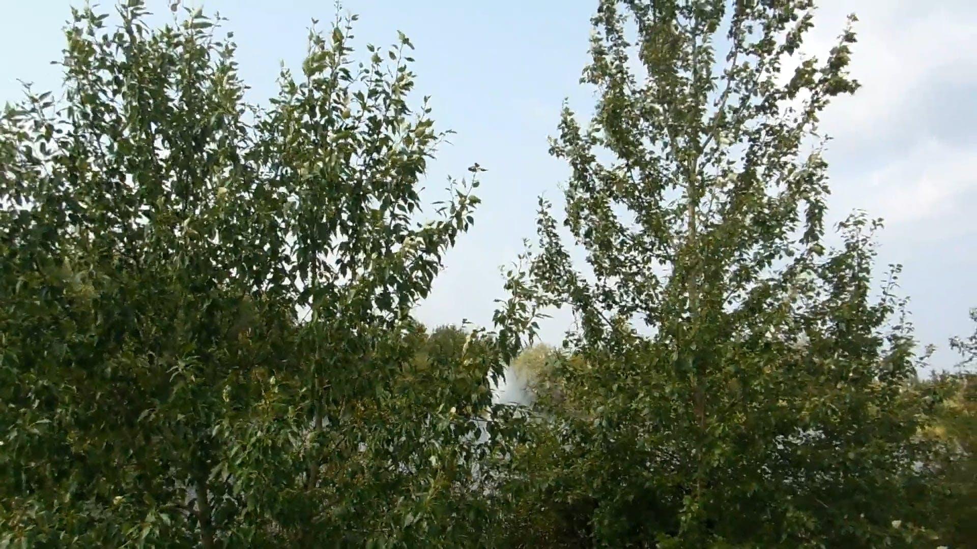 Trees Around The Lake Video