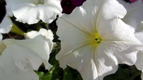Beautiful Bloom of White Flowers