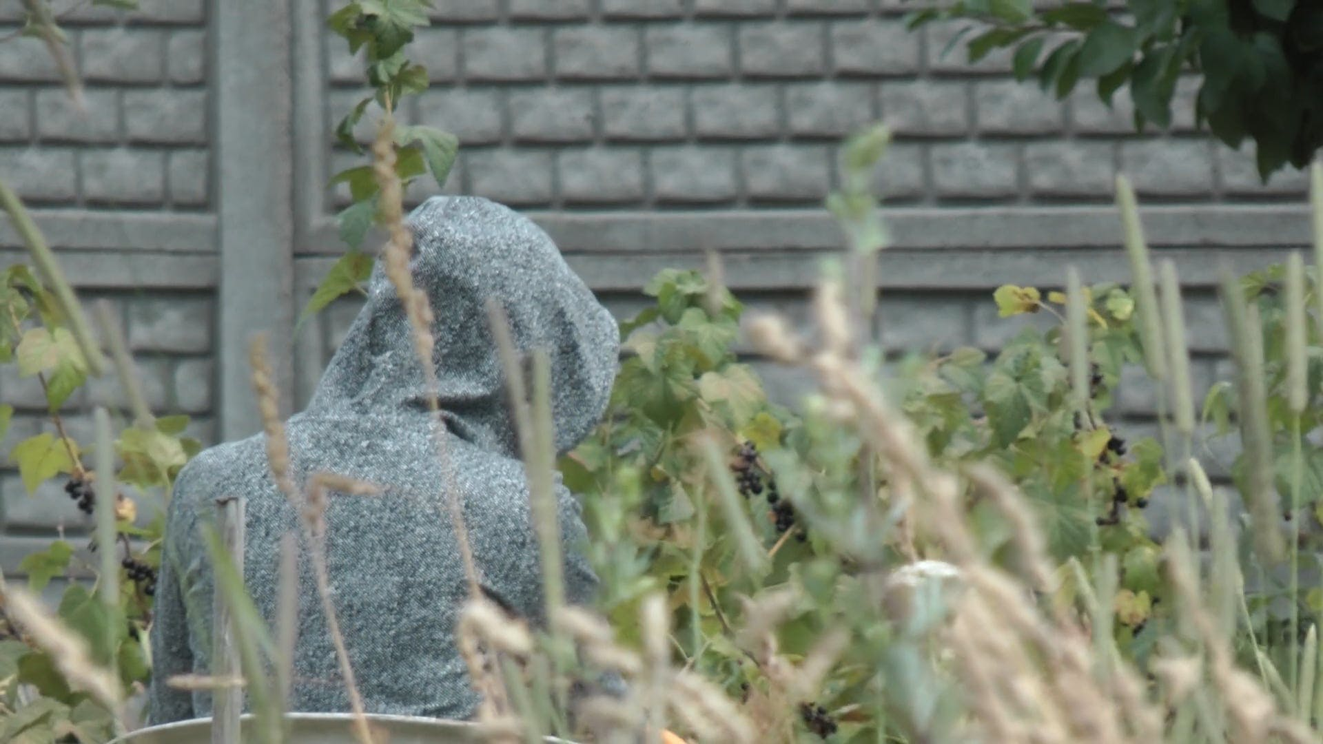 Person In Hoodie Harvesting Fruits