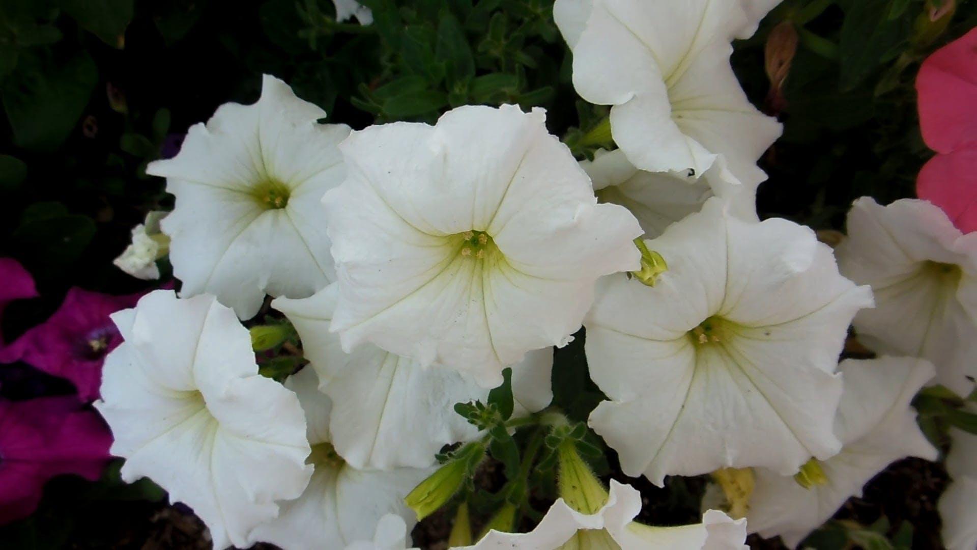 Summer Flowers On Breeze
