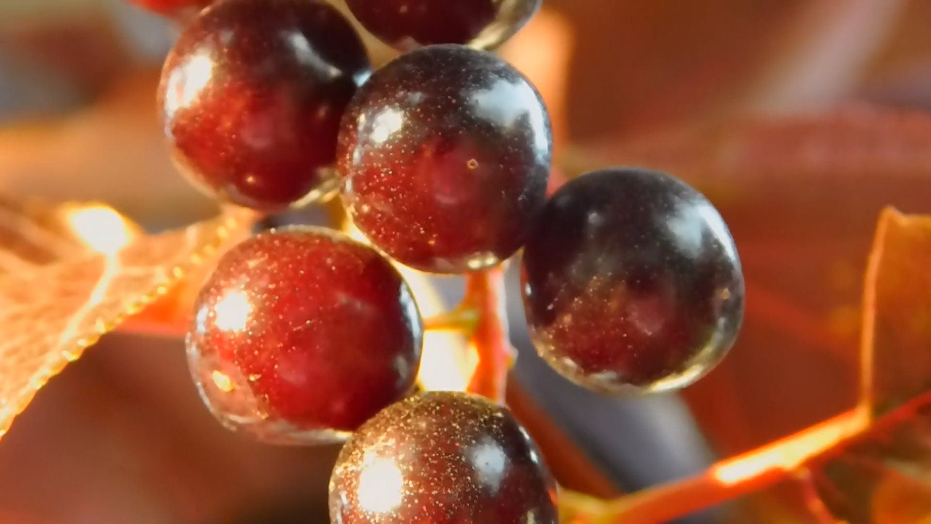 Close-up Photo of Berries