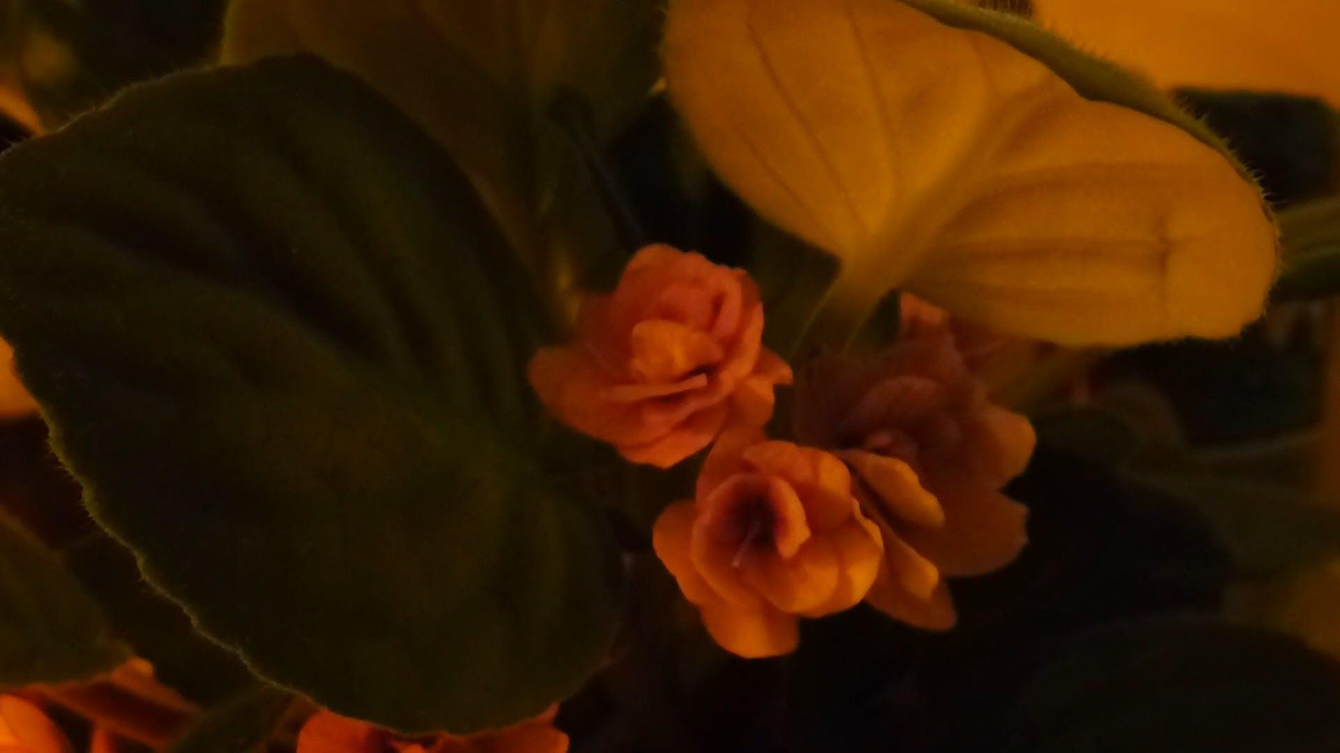 Flowers With A Unique Color