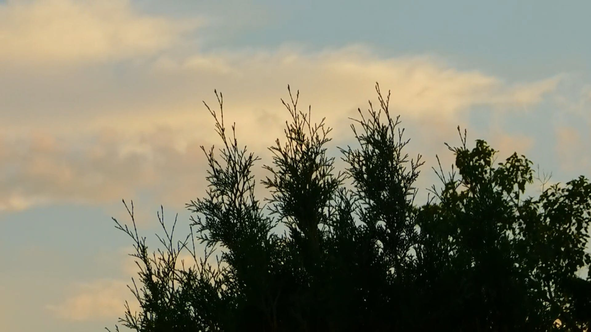Trees And The Sky At Sunset