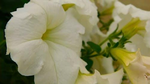White Beautiful Flowers Video