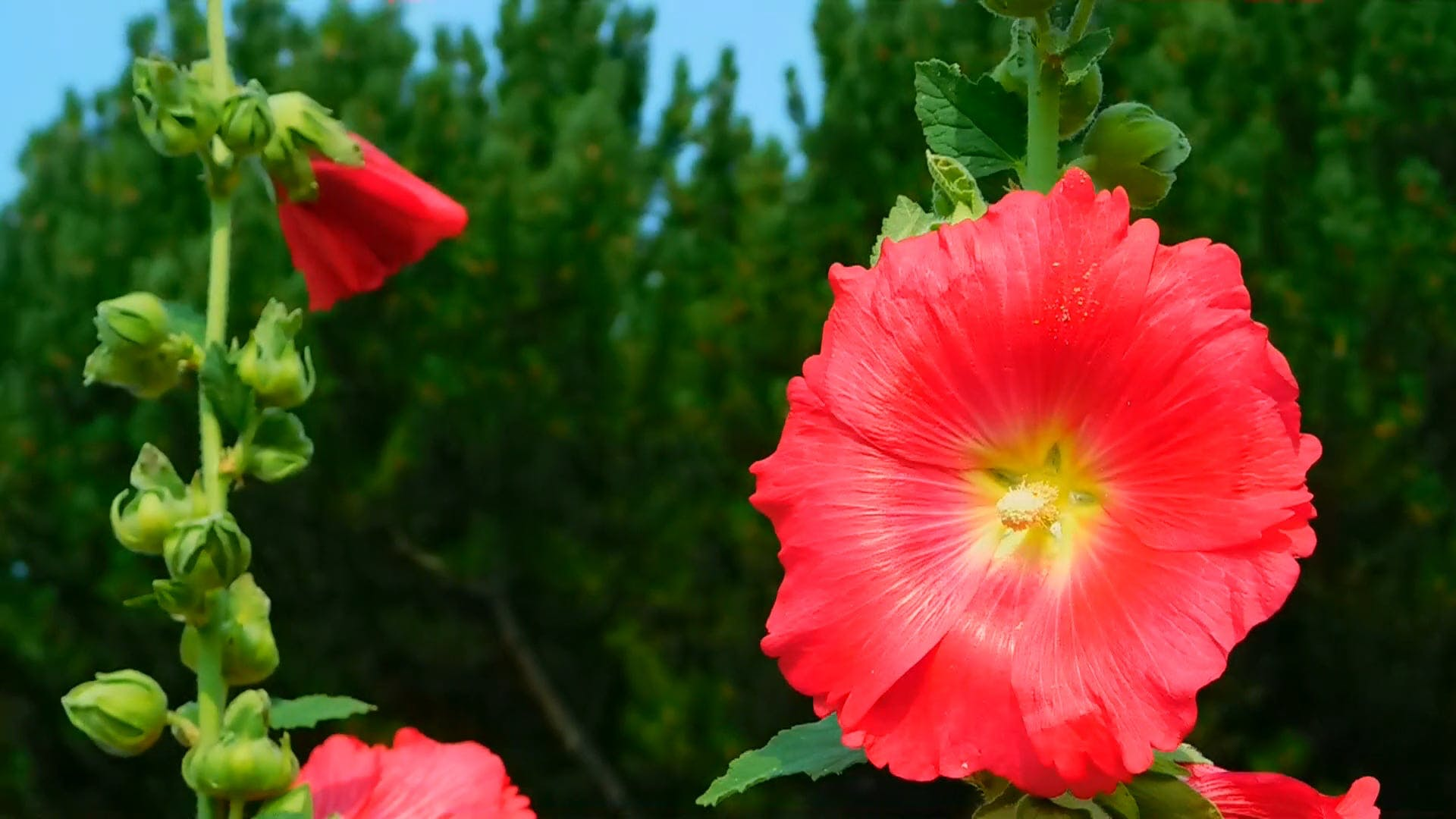 Video Of Flowers