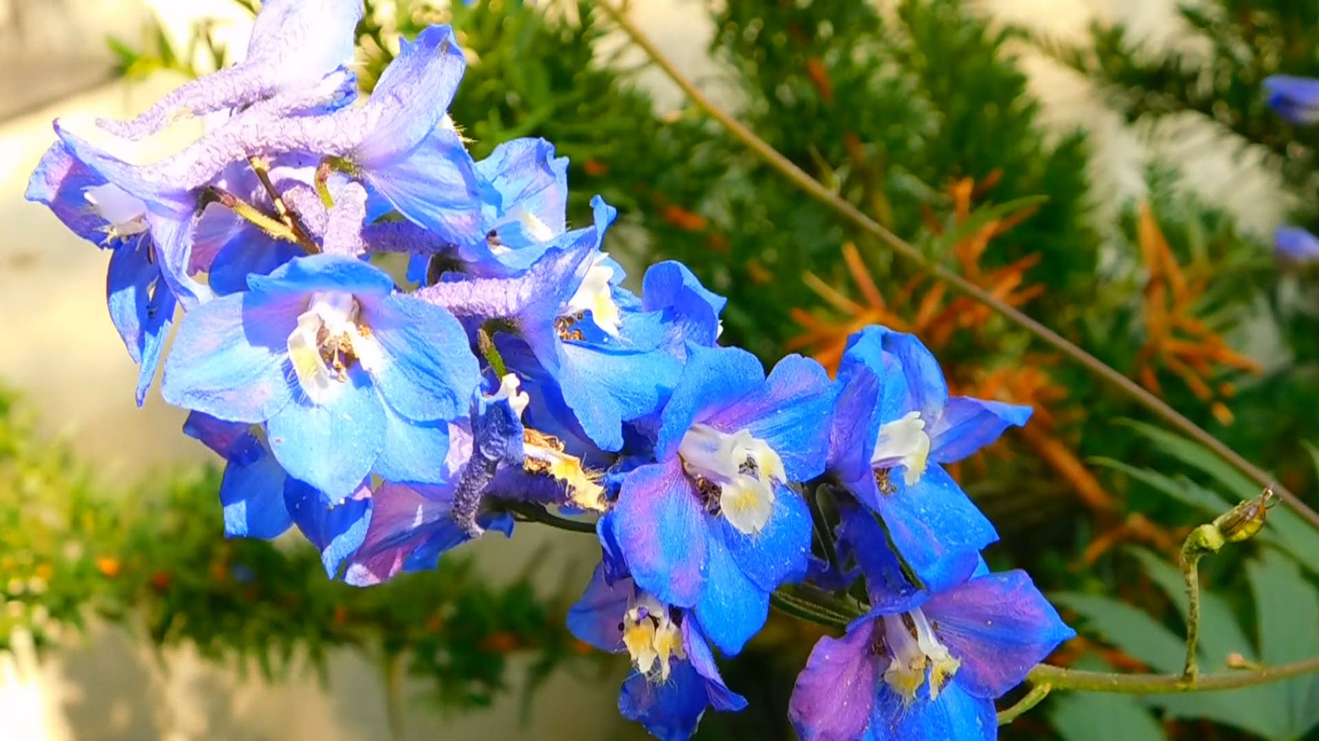 Close-up View Of Blue Flowers