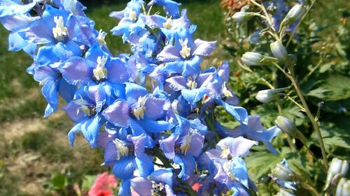 Close-up View Blue Flowers