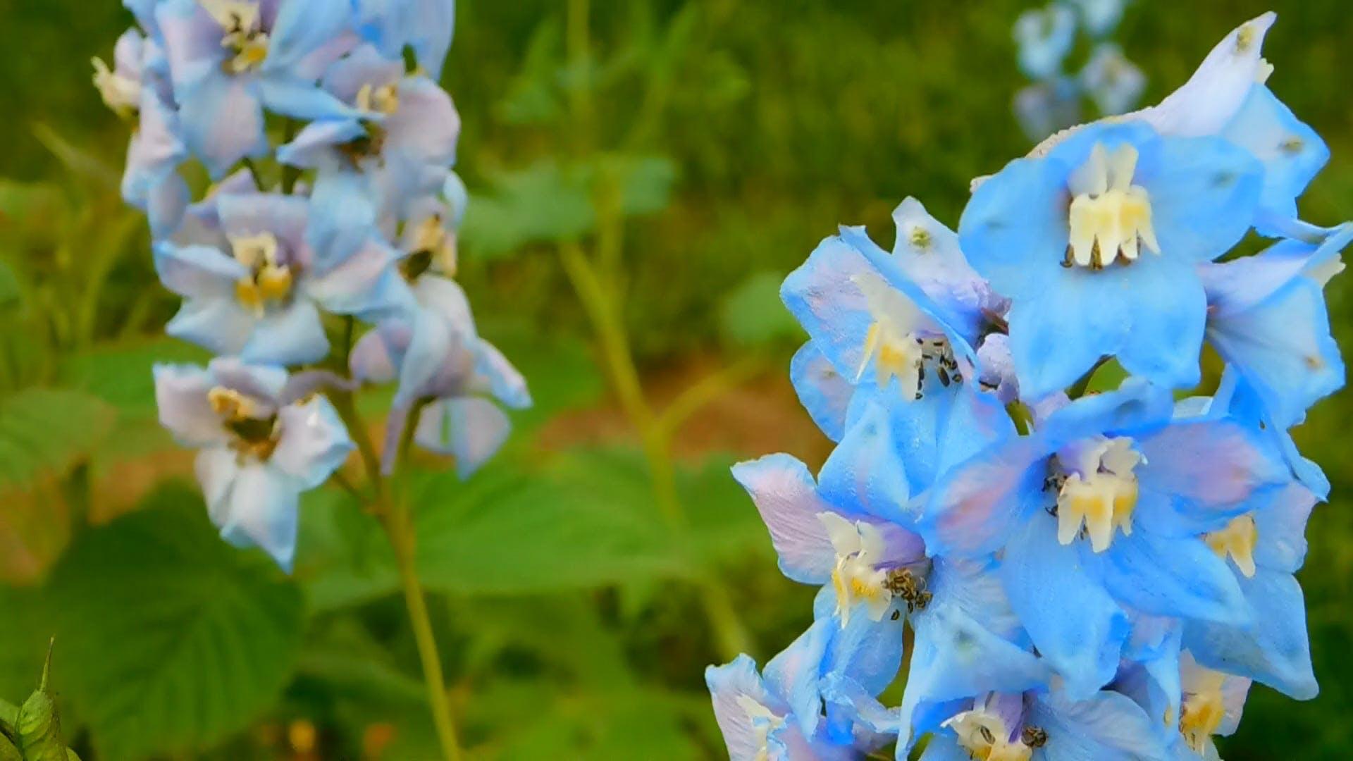 Unique Blue Flowers