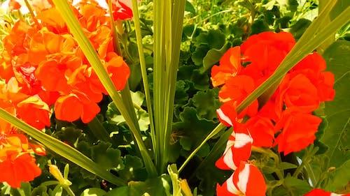 Beautiful Flowers In Summer