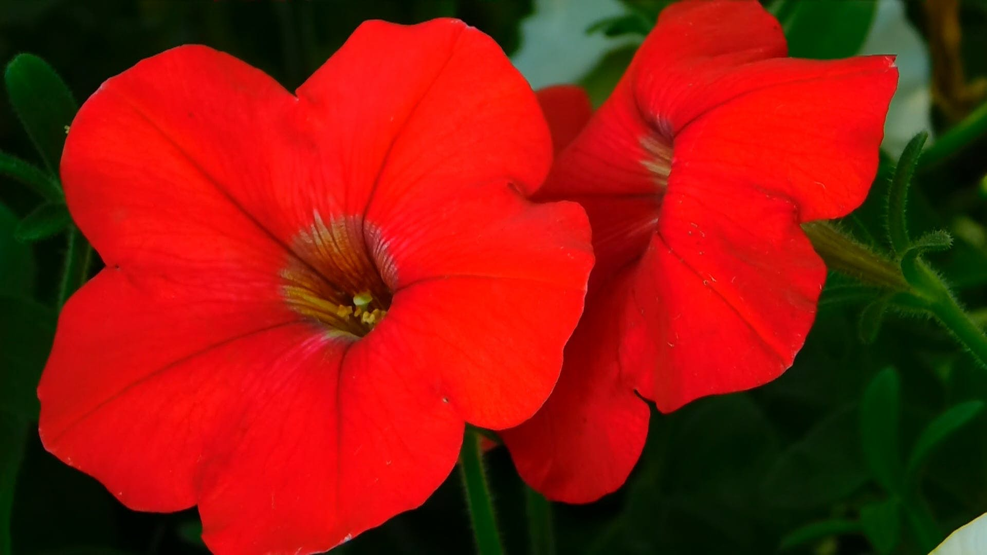 Fascinating Red Flowers