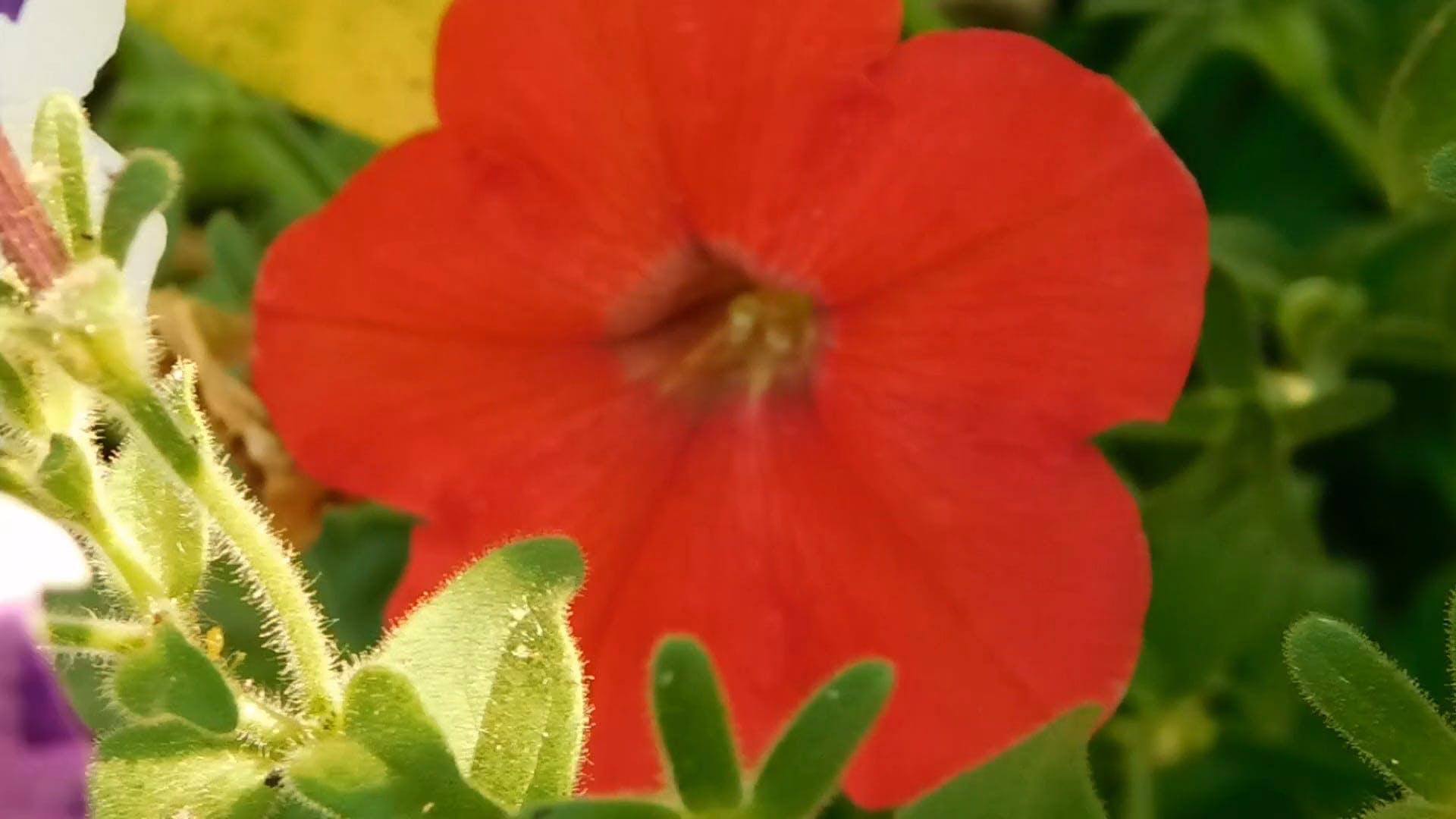 Red Flower Through My Lenses