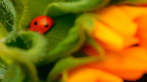 Close-up view Ladybug
