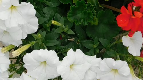 Abundance of White Flowers