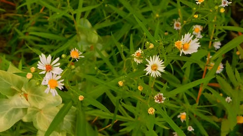 Wild Flowers at The Park