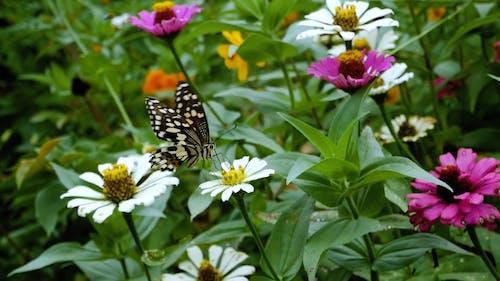 花上的蝴蝶