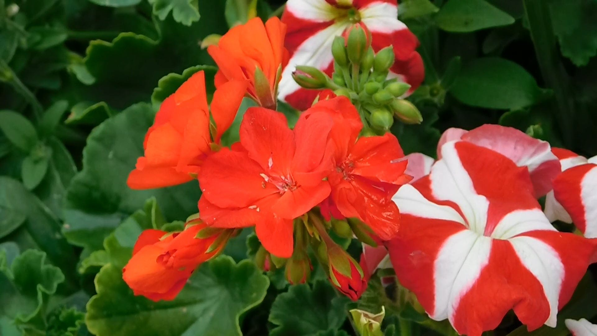 Beautiful Variation Of Red Flowers