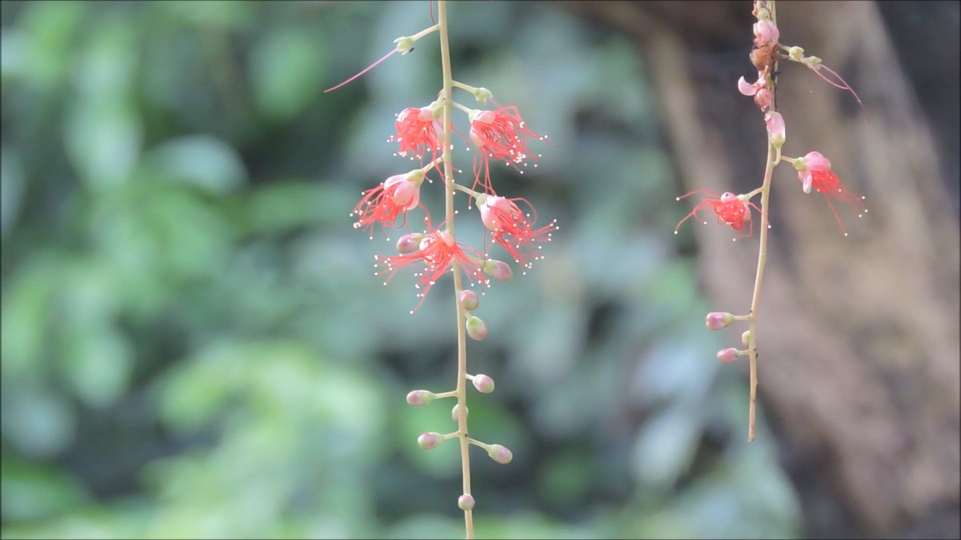 Time Lapse Video Of A Flower In Bloom