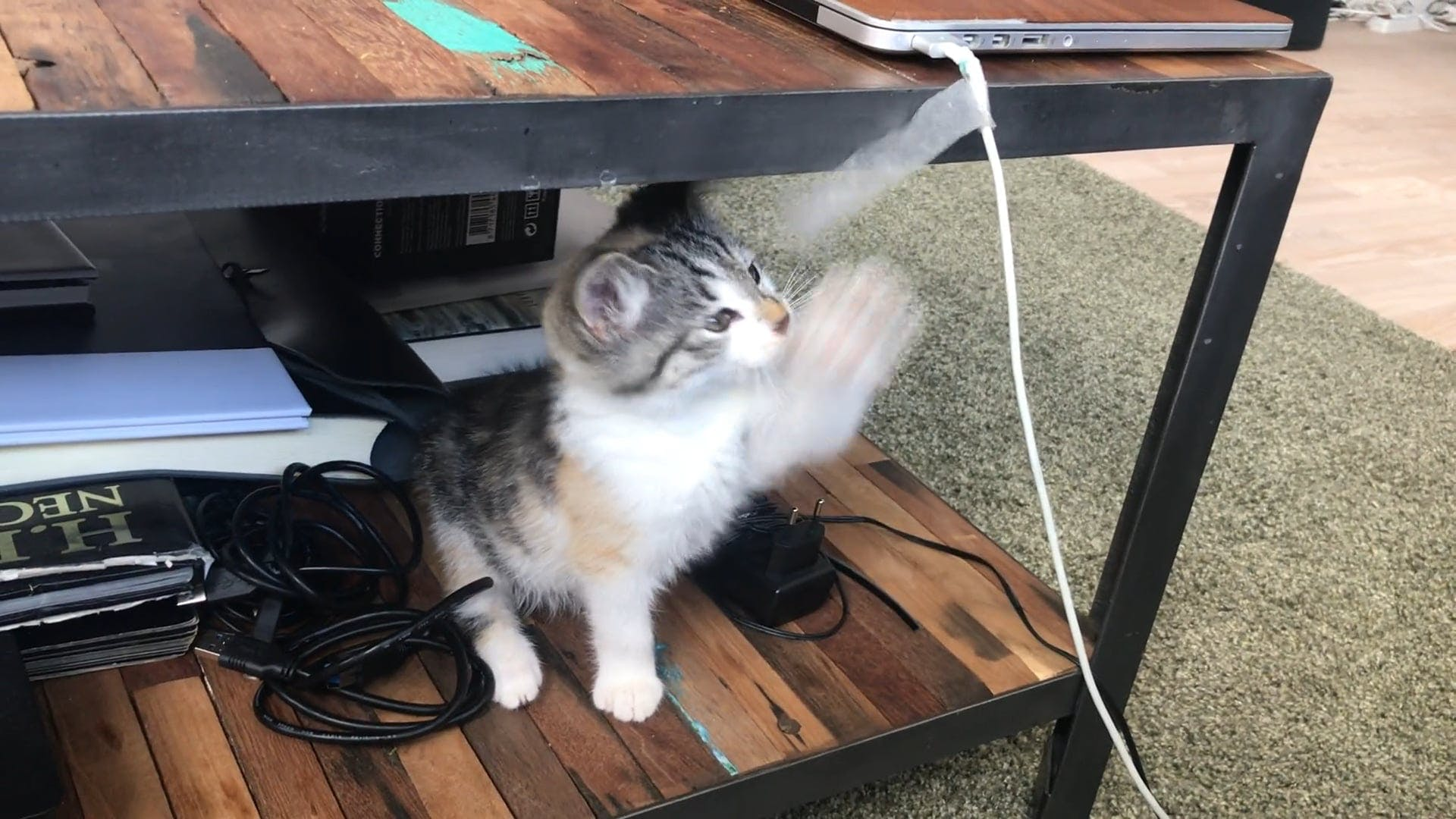 Cat Playing With Tape