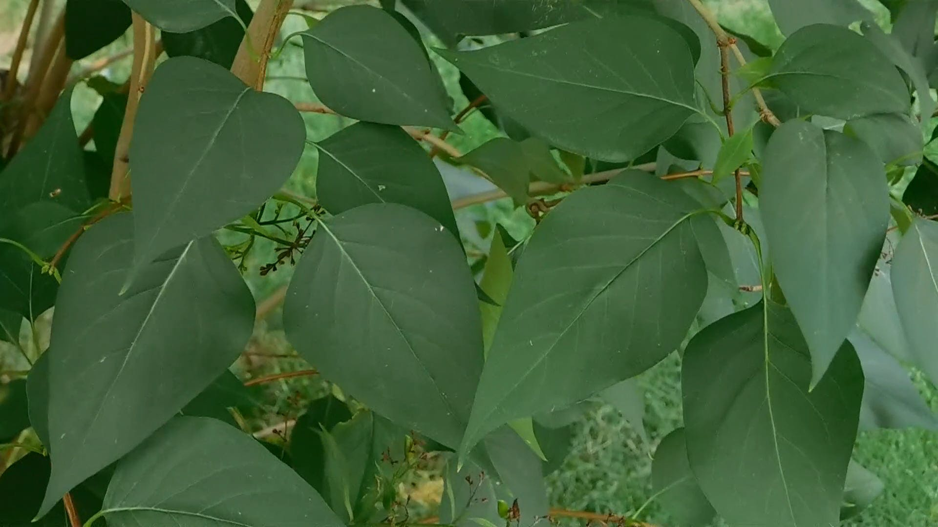 A Green Leafy Plant