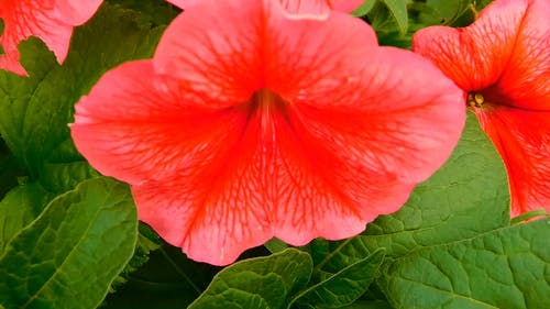 Close View of A Red Flower