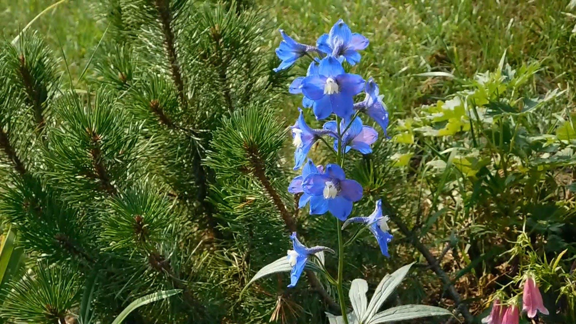 Blue Flowers Beside Pine Tree