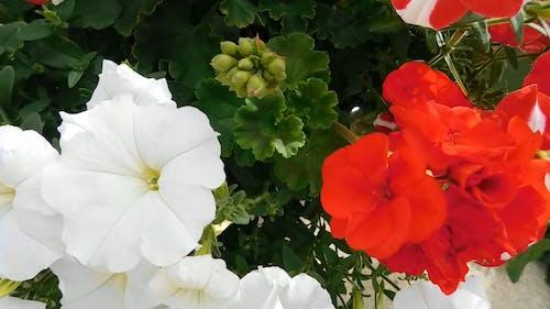 Assorted Flowers in the Garden
