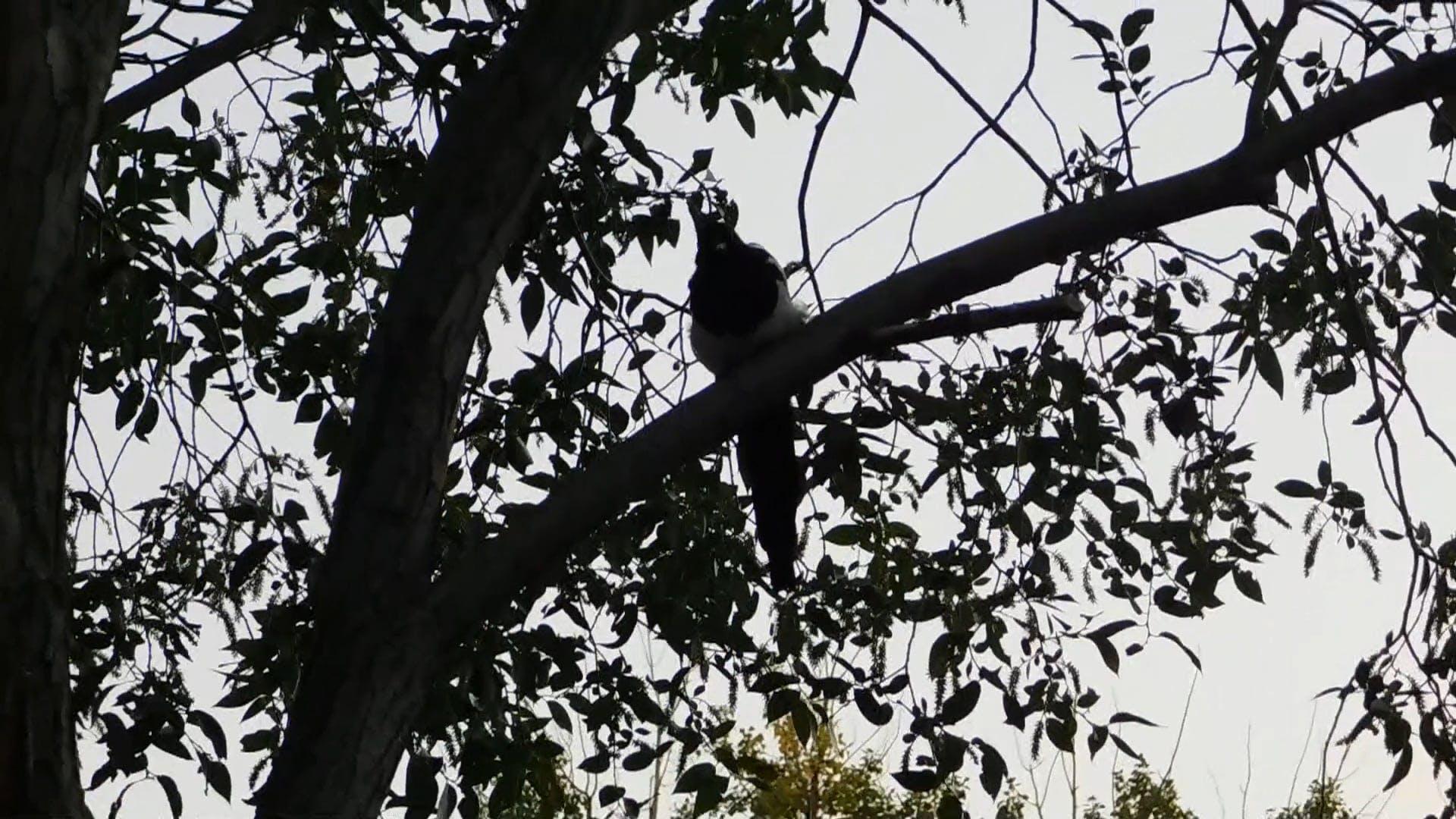 At The Dusk-Bird Watching