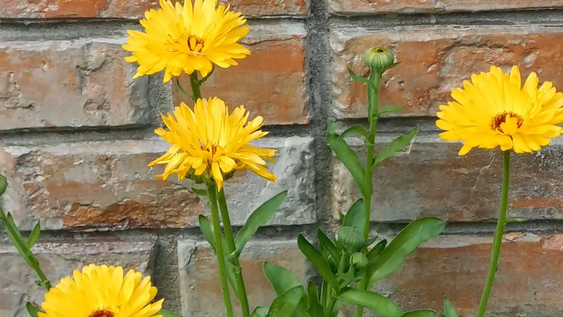 Wonderful Yellow Flowers