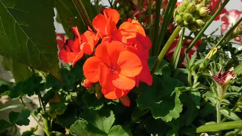 Late Summer Blooming Flowers