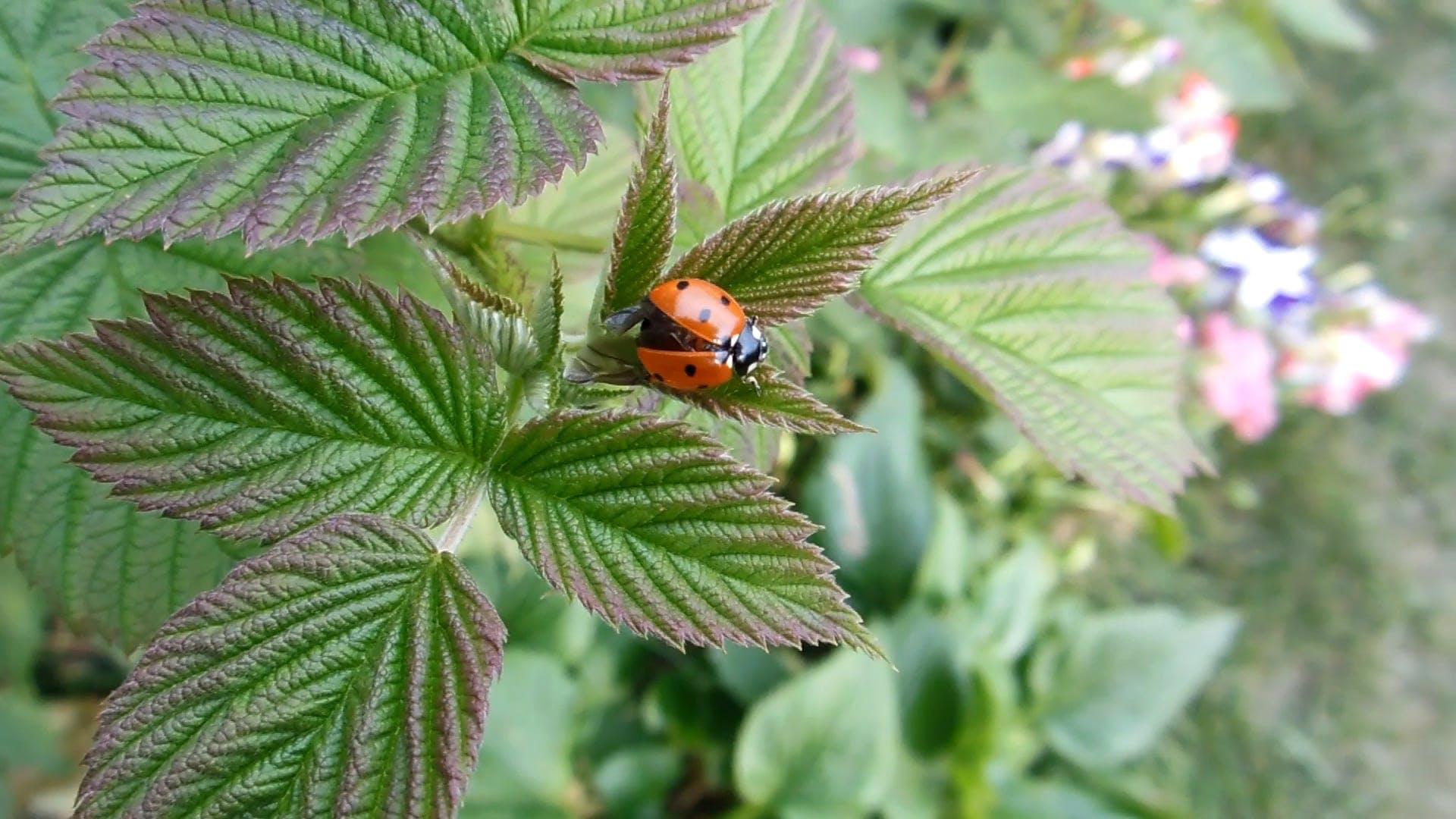 A Cute Ladybug Testing Her Wings