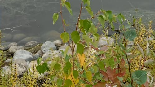 Plants Along A Body Of Water