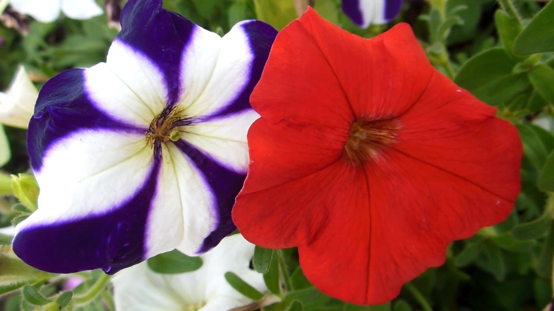 Wonderful Colors Of Flowers