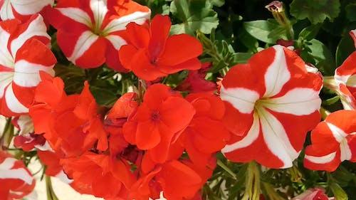 Unique Colorful Flowers