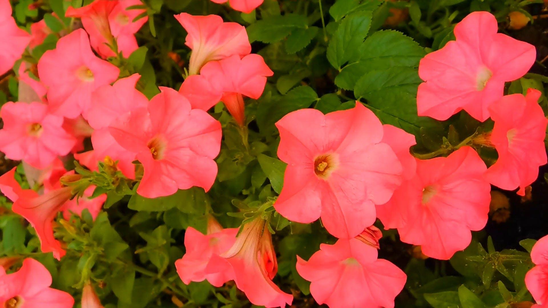 Wonderful Pink Flowers