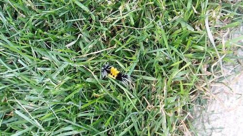 Fuzzy Moth Caterpillar