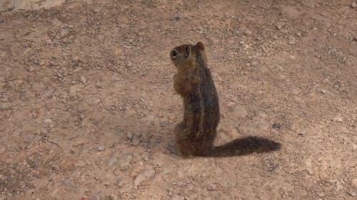 A Playful Squirrel