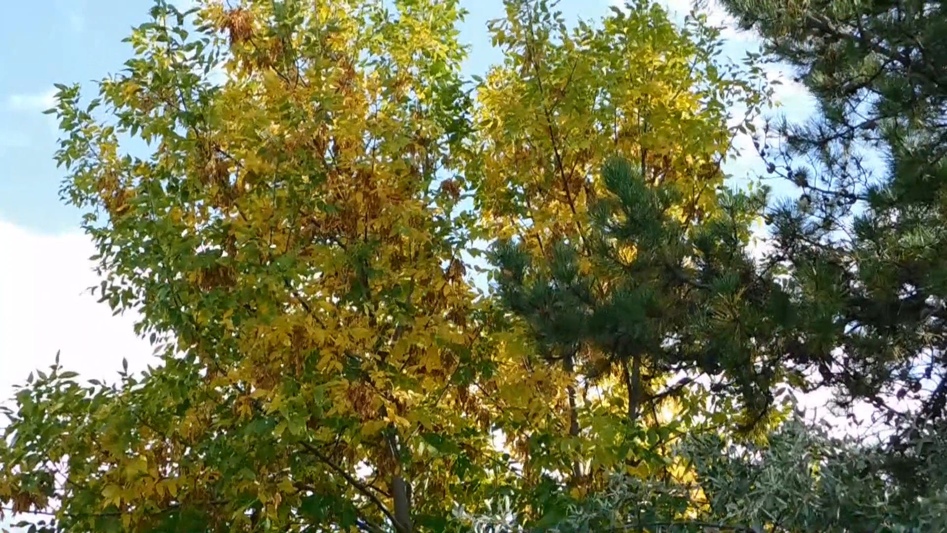 Trees With Changing Colors